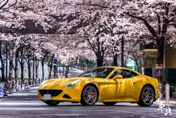 2016 桜車真満開 – 沢山のご依頼有難うございました。