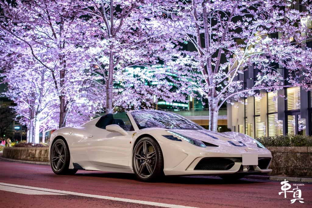 桜 車真 写真